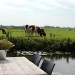 Dichtbij de koeien